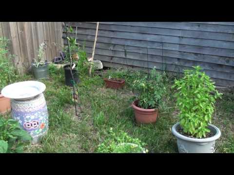 Organic Gardening Techniques Rosedale Austin