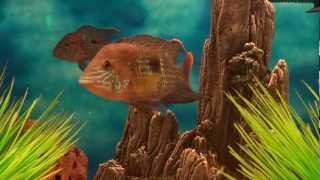 Fish Aquarium Part - 24