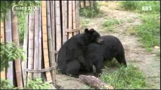 하나뿐인 지구 - 19g을 위한 사육, 나는 반달가슴곰입니다_#002
