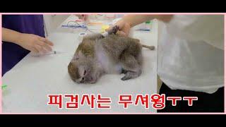 삼순이 피검사 받다!!