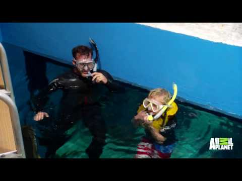 WWE's Chris Jericho Is Swimming With The Fishes In This Giant Aquarium | Tanked