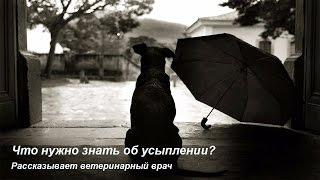 Усыпление животных, эвтаназия кошек и собак ЭТО НУЖНО ЗНАТЬ!