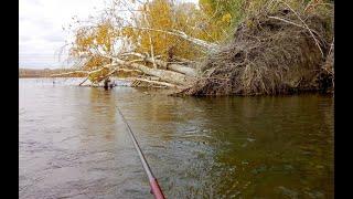 Рыбалка на ХАРИУСА в сентябре Ловля хариуса на удочку в проводку