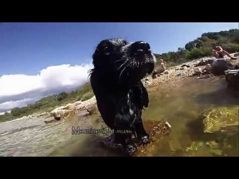 GoPro English cocker spaniel swimming dog under water - Brru on Sea