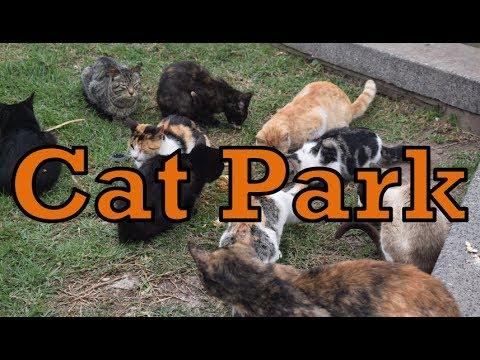 【ペルー#23】ネコだらけの公園【世界一周】-Cat Park in Peru-