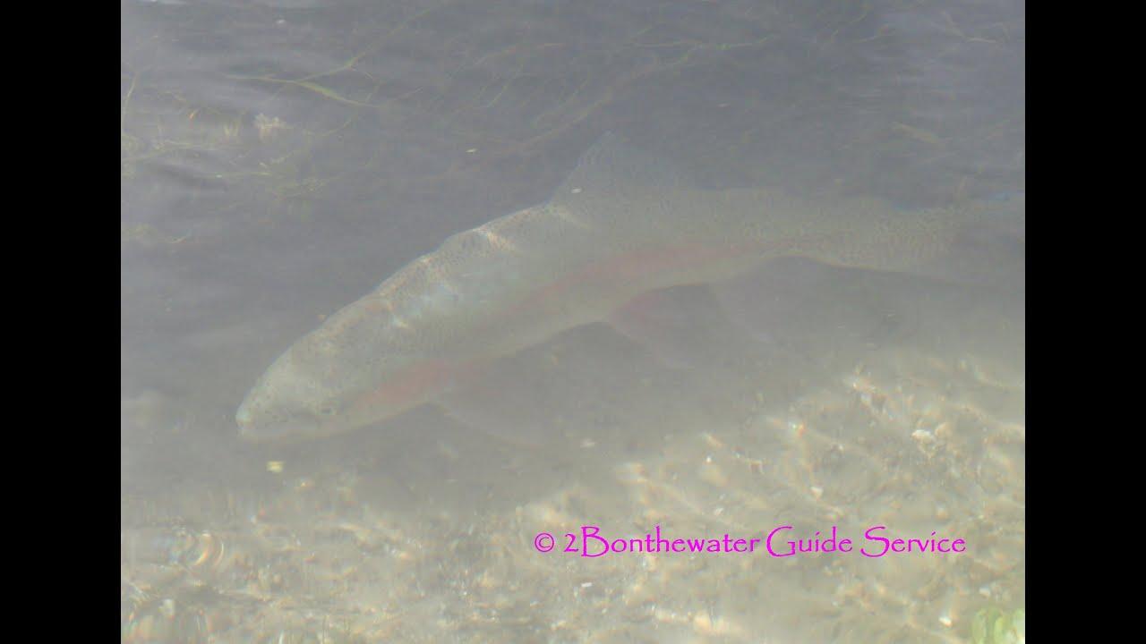 Big spring creek fly fishing pennsylvania 39 s cumberland for Spring creek pa fishing report