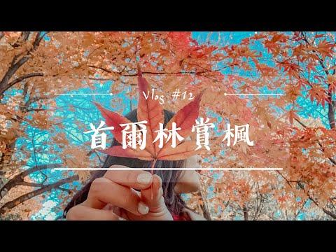 韓國VLOG#12 2019首爾林(上)賞楓、黃澄澄的銀杏樹、秋天打卡聖地、拍照技巧!秋天必去、韓國人的最愛|二零2020