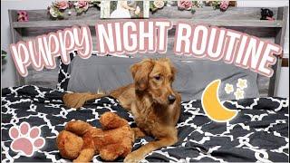 Golden Retriever Puppy's Night Routine   Larsey's Nighttime Routine