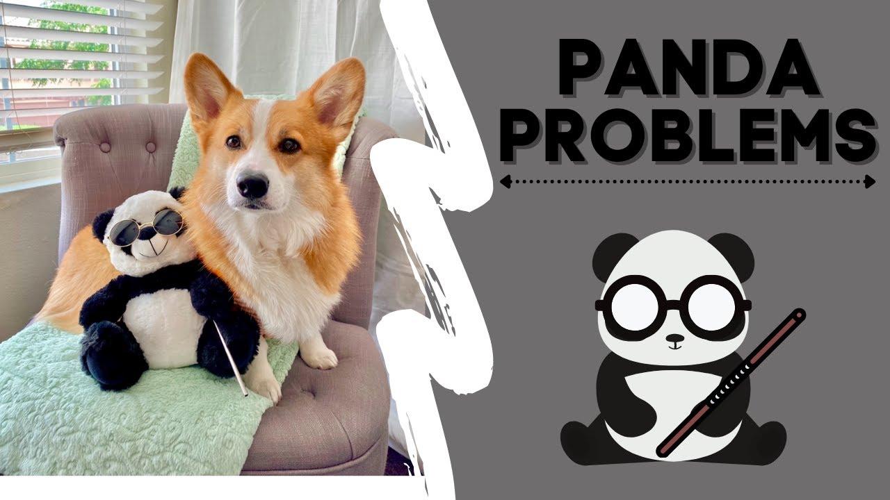 Talking Corgi tries to take BLIND Panda to the Park! #shorts