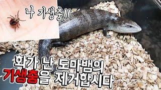 키우던 도마뱀한테 진드기들이 바글바글  간만에 기생충제…