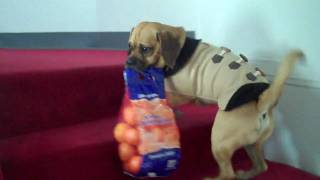 Puggle Preston Little Grocery Helper