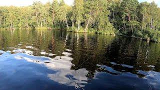 Не ожидал таких сюрпризов от дикого озера  Клюёт только на вертушку!!! Рыбалка на спиннинг