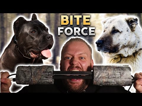WHAT DOG BREED HAS THE HIGHEST BITE FORCE??