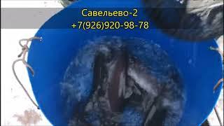 Запуск форели Савельево 2 Рыбалка