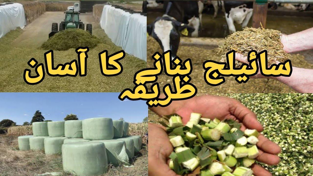 Download Silage Making in pakistan complete procedure , Silage Bnane ka tarika urdu hindi