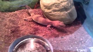 HUGE Reptile Room Update 5-15-11