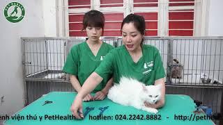 Hướng Dẫn Tắm Cắt Cнo Thú Cưng Tại Nhà - Bài 9 ( hướng dẫn chăm sóc cho các mèo lông dài )