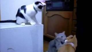 Подстава от кота