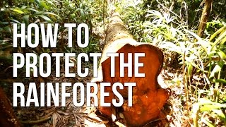 How to Protect the Rainforest
