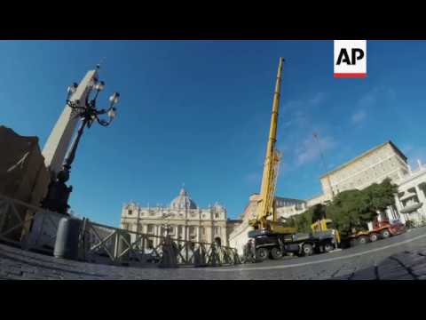 Crane sets Christmas tree in St Peter's Square