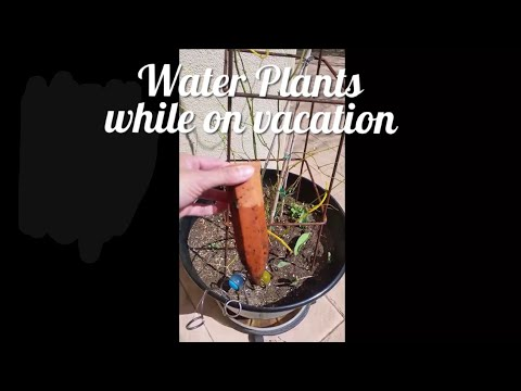 Watering plants while on vacation - plant waterer