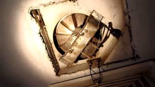 Home Inspector Seattle Shows Attic Mold Problems | (425) 207-3688 | CALL US!