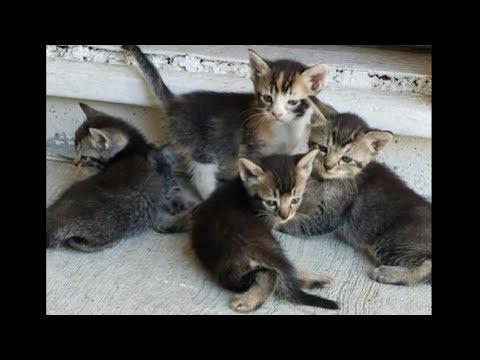 Робкая кошка сидела дверей за 6 сентября