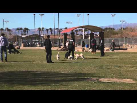 Dog Park Blooper | Dog Bites Dog Trainer at Dog Park | SitMeansSit.com