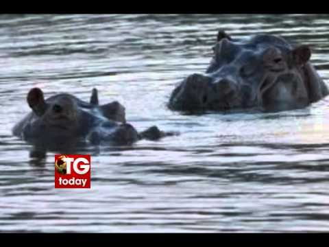 Twelve school children killed in hippo attack, In Nigeria