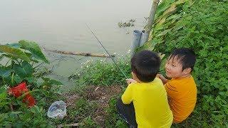 Cận cảnh  cá lôi mất phao – câu cá chép đồng