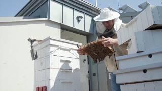 Как пчелите на АББ спомагат за анализа на големи масиви от данни thumbnail
