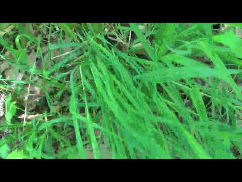 ASMR* Outdoor Sounds # 2* Tapping & Scatching* No Talking*