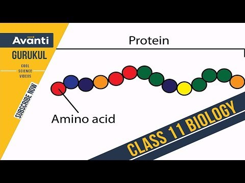 Proteins | Amino acids | Class 11 Biology