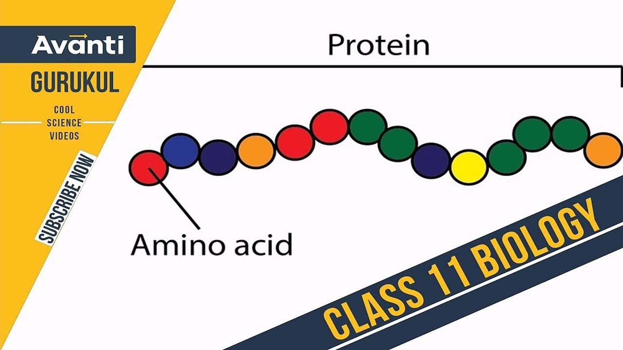 The Sports Archives – Personal and Athletic Health ... |Proteins Amino Acids