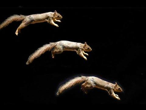 """Can """"squirrelly"""" skills be built into robots?"""