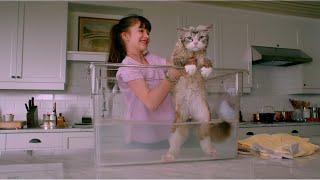 رجل أعمال بيصحى في يوم من النوم بيلاقي نفسه قطة 😃 Nine lives