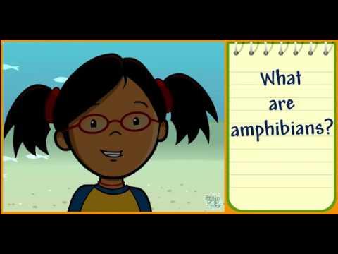 Classifying Animals Brainpop Jr Youtube