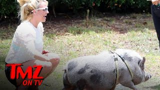 Britney Spears Befriends a Pig While Vacationing in Hawaii