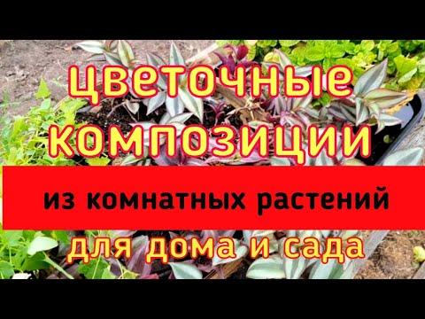 Цветочные композиции из комнатных растений/ Ампельные комнатные цветы/ [Хлорофитум, зебрина, пилея]