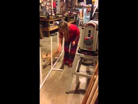 Teaching my dog weave poles