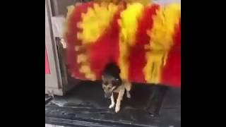THE DOG Free Massage Service Without Car Wash