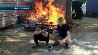 Во Владимире двух подростков живодеров поместили в спецприемник