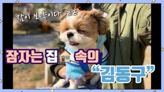 [동구똥구] 시츄일상 6# 잠자는 집속의 김동구