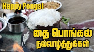 Pongal Celebration | தை பொங்கல் திருநாள் | Pongal celebration In village | Full Pongal Lunch Menu