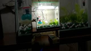 Самодельный бульбулятор для аквариума