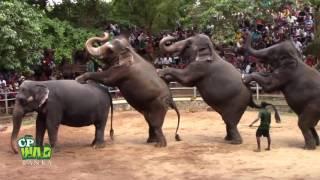 Elephants Dance At Dehiwala National Zoo Sri Lanka  |  Things To Do Sri Lanka