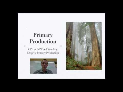 Ecosystem Productivity and Limiting Factors