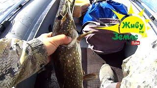 Трофейные щуки. Сплав по реке. Рыбалка на спиннинг. Воблер из Китая.