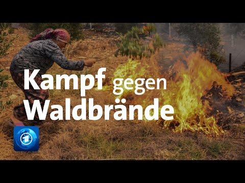 Türkei und Griechenland: Kampf gegen Waldbrände