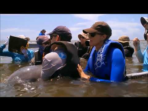 Ryan Takeshita, Assessing dolphin health: Inshore populations